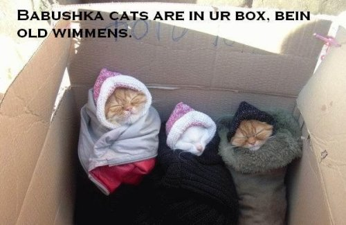 2380452155c3f884e3 babushka cats are in your box being old women myspace comments and