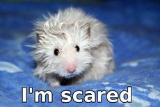 mouse is scared