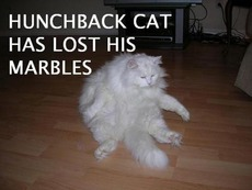 hunchback cat has lost his marbles