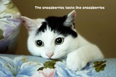 the snozzberries taste like snozzberries