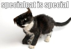 special cat is special