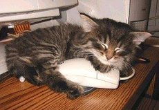 cat sleeps on mouse