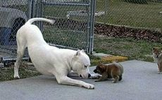 funny dog fight