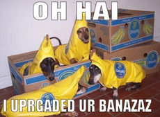 oh hi i upgraded your bananas