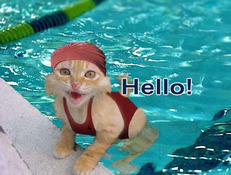 hello swimming kitten
