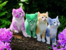 Colored Kittens