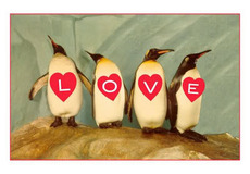 love penguins