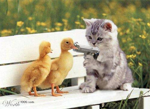 cat with gun holds up baby ducks myspace comments and