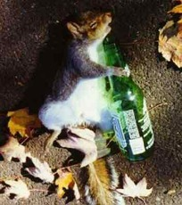 Sleeping mouse with a beer
