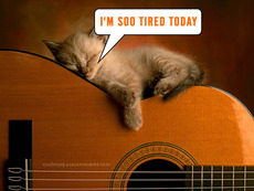i'm so tired today cat sleeping on guitar