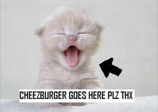 cheeseburger goes here please thanks