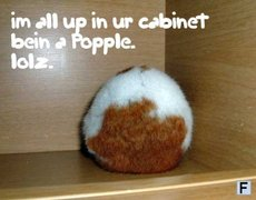 im all up in your cabinet being a popple