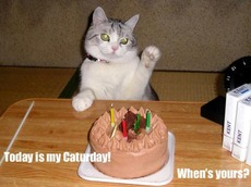today is my caturday when's yours?