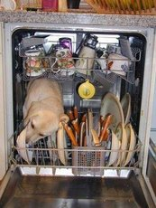 dog in dishwasher