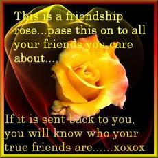 this is a friendship rose