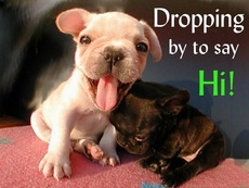 dropping by to say hi puppies