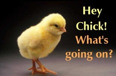 hey chick whats going on