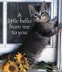 a little hello from me to you