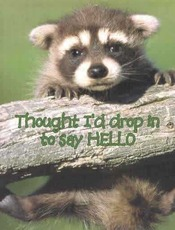 thought i'd drop in to say hello baby raccoon