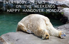 happy hangover monday