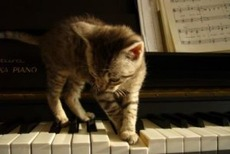 cat playing piano